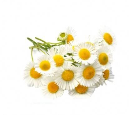 Empresa de Aroma Marketing  na Bela Vista - Marketing Aromático