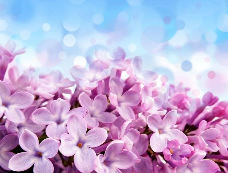 Empresa para Aromatização Eventos no Jardins - Aromatização de Eventos