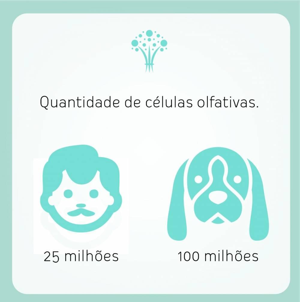Preço Essência Personalizada em São Caetano do Sul - Essência Personalizada no Paraná