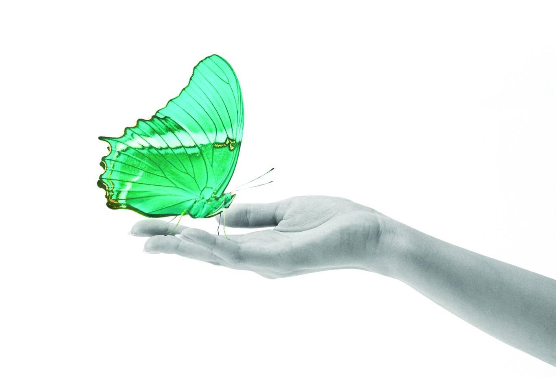 Serviço de Aromatização Ambiente na Casa Verde - Aromatização para Ambiente