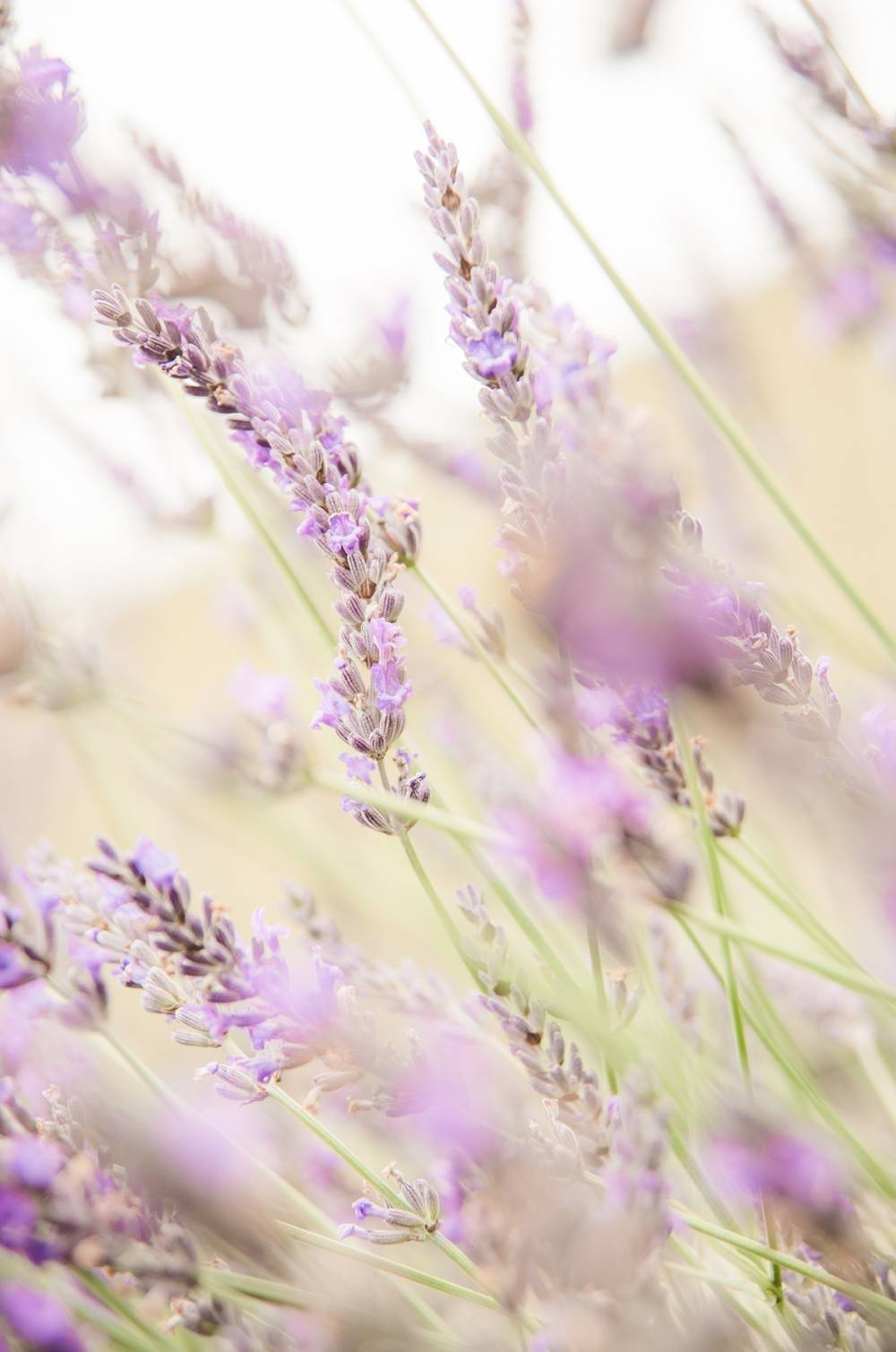 Serviço de Aromatização em Ambientes no Jardim Ângela - Aromatização de Ambientes Preço